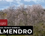 Jornada técnica sobre el cultivo del almendro en el Edificio de Usos Múltiples de Mengíbar, este jueves